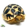Sri Lankan star tortoise habitat