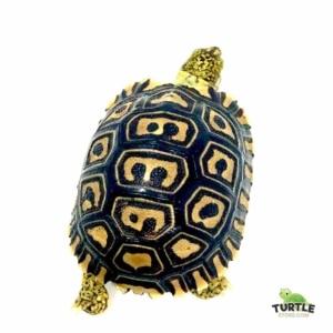 baby Giant leopard tortoise