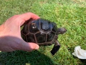 aldabra tortoise origin